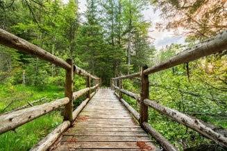 Photo: A cedar footbridge crosses a bog near the Boardman River