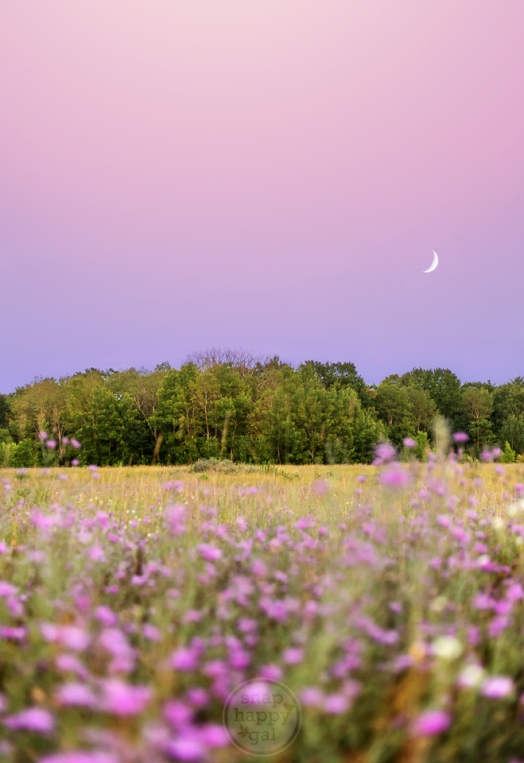 A crescent moon hangs in a purple sky marked by matching flowers at the Pelizarri Natural Area near Traverse City