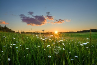 Photo: Sunset drenches a rolling pasture spotted with daisies
