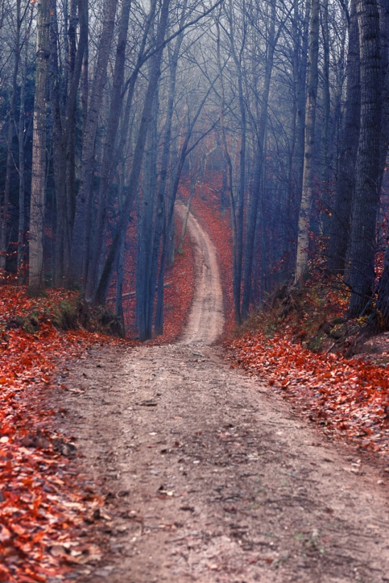 A steep country road winds into a moody Leelanau County forest