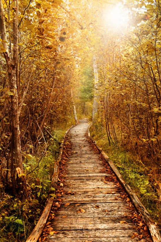 Sunlight glows through fall foliage on a boardwalk near the Boardman River