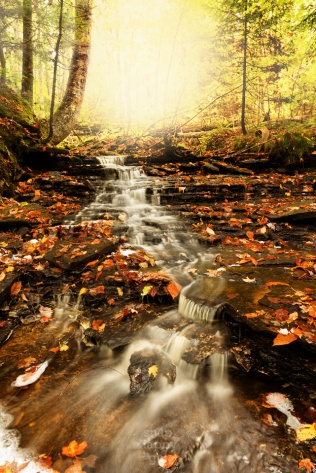 A small stream cascades out of a glowing woodland down a fall-foliage lined creekbed
