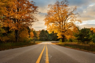 Full, golden maples stand as roadside guardians along a stretch of highway in the Sleeping Bear Dunes