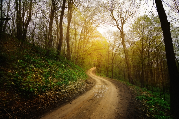 Photo: A country road winds through Michigan's Leelanau county in the spring