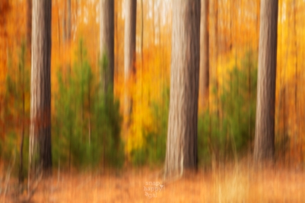 impressionist-fall-trees-10151122