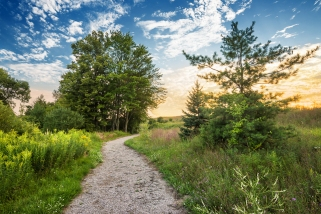 Golden hour graces a pathway in late summer along the Kids Creek preserve in Traverse City