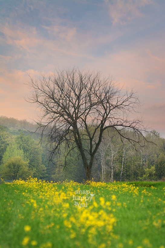 Photo: Wildflowers and foggy sunset skies surround a lonely tree