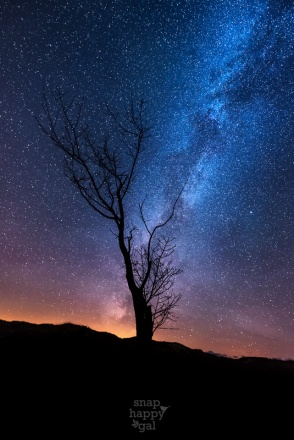 Twilight and the Milky Way sparkle above this lonely tree in the Sleeping Bear Dunes