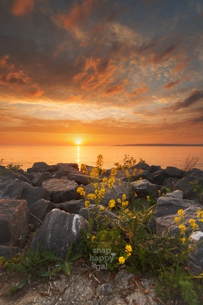 Photo: A warm sunset glows above highlighted wildflowers and Lake Michigan in Petoskey