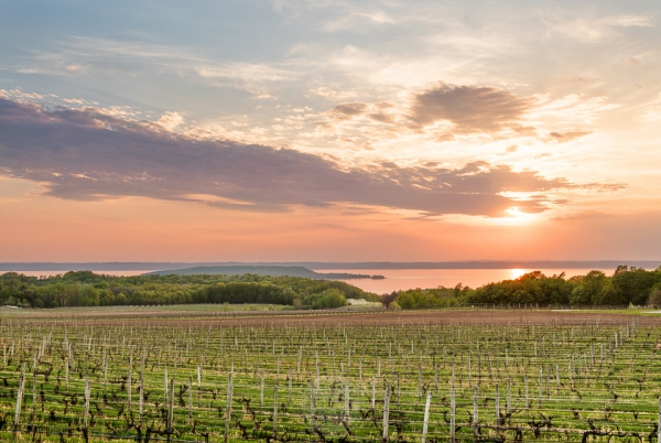 A peach-toned sunset highlights rows of grape vines and the waters of West Grand Traverse Bay