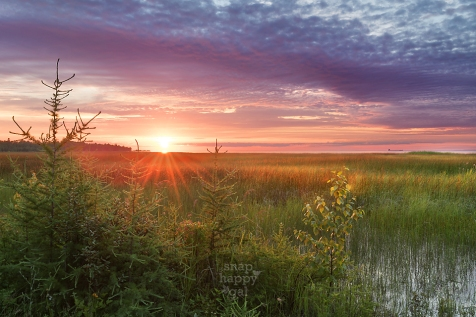 pink-purple-northern-Michigan-wetland-sunset-07161925