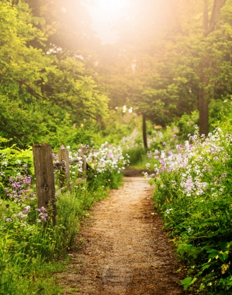 A split rail fence and bunches of wildflowers edge a path leading into glowing light