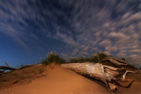 A fallen member of a ghost forest reaches out under a starry sky dotted with clouds