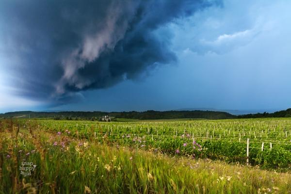 Photo: Shelf cloud over vineyard, Old Mission Peninsula in northern Michigan