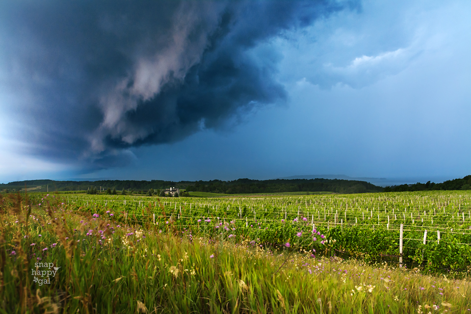 Photo: Shelf cloud over vineyard, Old Mission Peninsula in northern Michigan