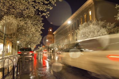 Traverse-City-blossoms-night-rain-05165900