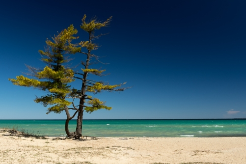 A lone pine stands on the beach near the Caribbean-like waters of Lake Michigan at Wilderness State Park