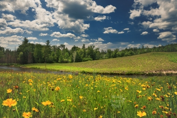 wildflowers-river-summer-clouds-06161810
