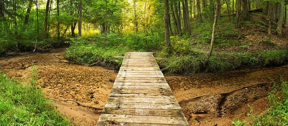A footbridge crosses a small clear creek into a summer forest