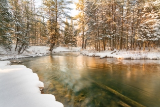 Photo: Golden light falls on pine trees and fresh snow at the Boardman River