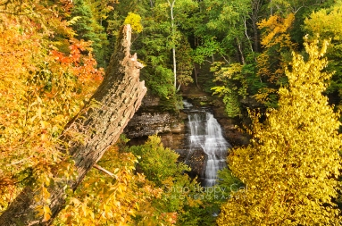 Photo: Chapel Falls waterfall, viewed between fall trees