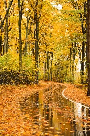 Photo: fall reflections, curvy wet road