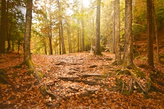 Photo: tree roots, fall forest floor