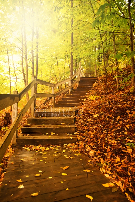 Photo: Winding wooden stairway through golden fall forest