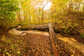 Photo: footbridge crossing a small creek in fall woods