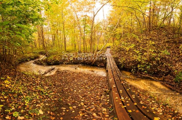Photo: footbridge crossing a small creek in fall woods