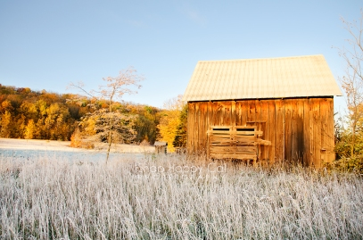 Photo: fall color, frost, old barn, golden hour