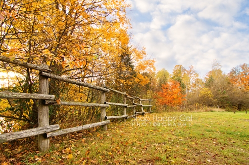 Photo: fall trees line a rustic fence