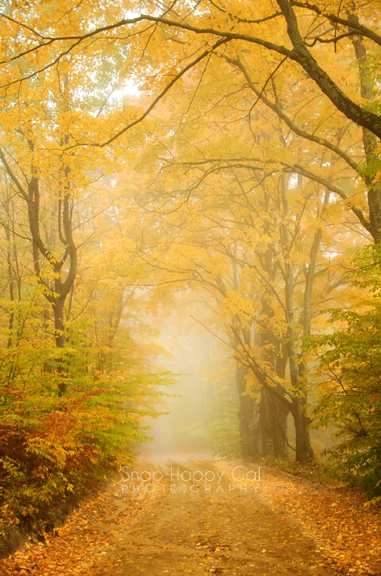 Photo: Golden trees surround a foggy Michigan back road
