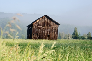 Photo: A dilapidated barn emerges from the morning fog