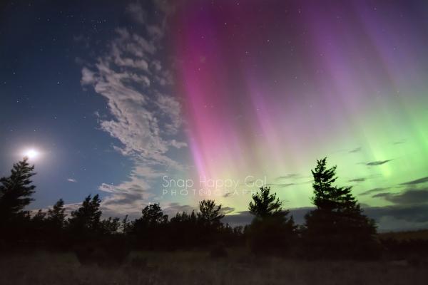 Photo: Moonlight, stars, Northern Lights, pine trees.