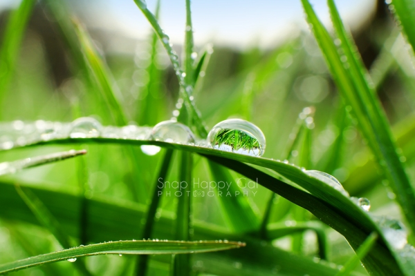Photo: macro - grass lawn reflects in a single raindrop suspended on blade of grass