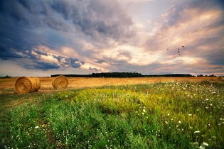 Photo: round bale in a field at sunset