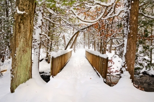 Photo: Snow covers a footbridge through a wintry forest