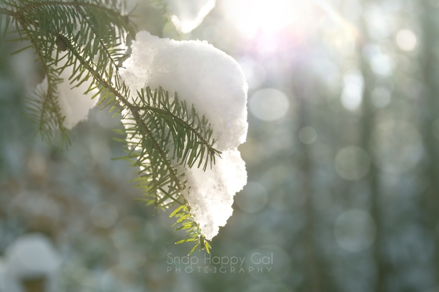 snow-covered-pine-bokeh-01162841