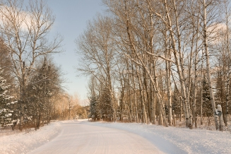 Photo: morning light shines on an aspen grove next to a Michigan country road