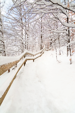Photo: heavy snow coats winter woodland and tree lined path