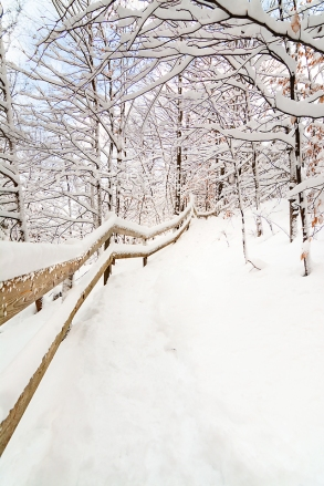 Photo: heavy snow coats winter woodland and tree lined path