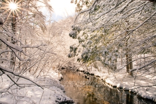 Photo: snowy branches around a narrow river