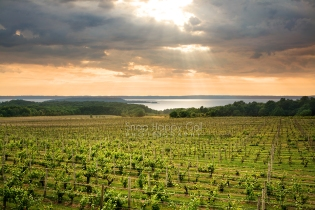 Photo: vineyard above Lake Michigan, lit by sunrays
