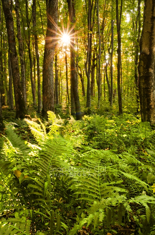 Photo: The evening sun shines over a fern-filled forest