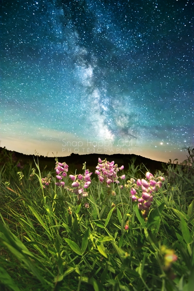 Photo: Milky Way above light painted sweet pea