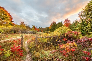 Photo: fall color - wild grape, red sumac, split rail fence