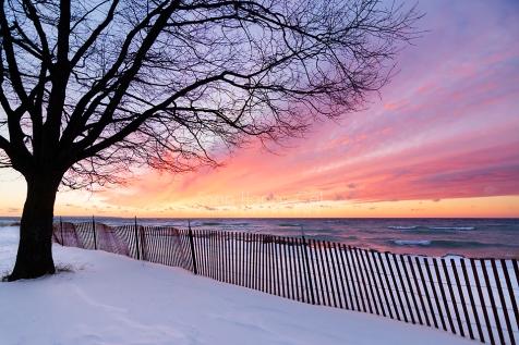tree-fence-silhouette-beach-sunset-01162802