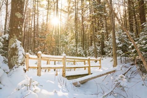 winter-fence-cedar-sunny-01162849