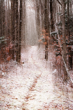 Photo: Snowy path through the woods in the late fall